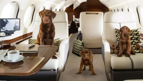 UberJets Pets